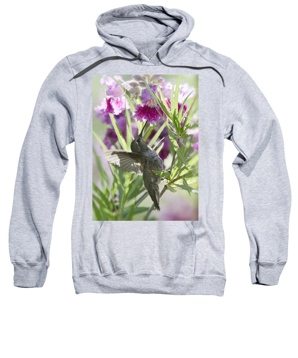 Hummingbird Sweatshirt featuring the photograph Hummingbird On A Desert Willow by Saija Lehtonen