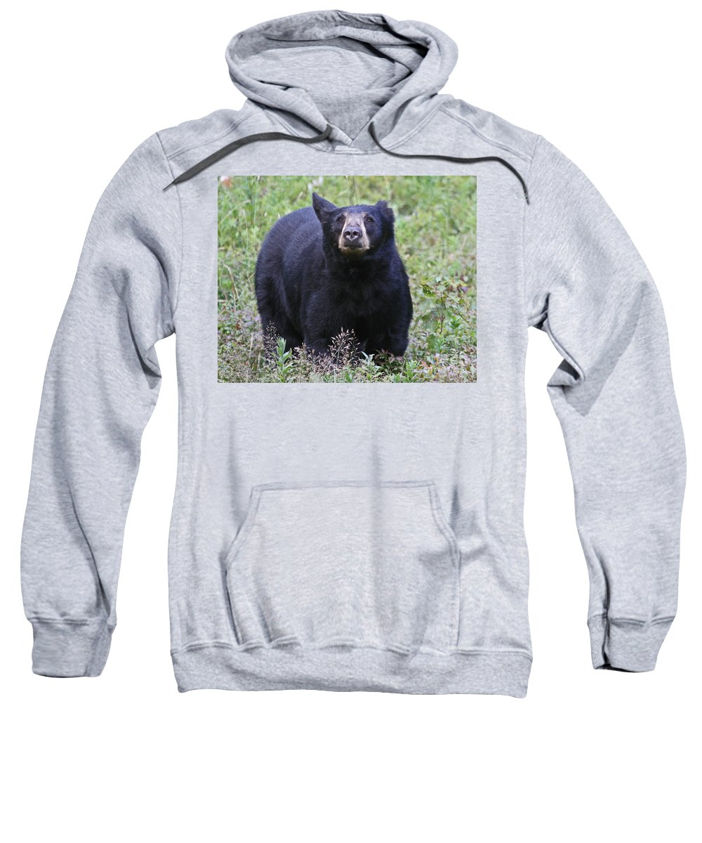 Bear Sweatshirt featuring the photograph I Can Smell You by Lloyd Alexander