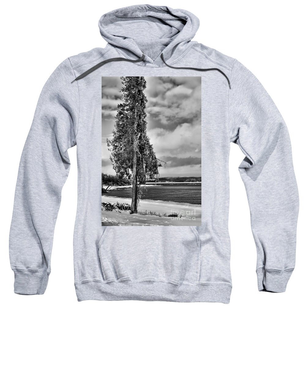 Ice Sweatshirt featuring the photograph Ice Coated Tree by Louise Heusinkveld