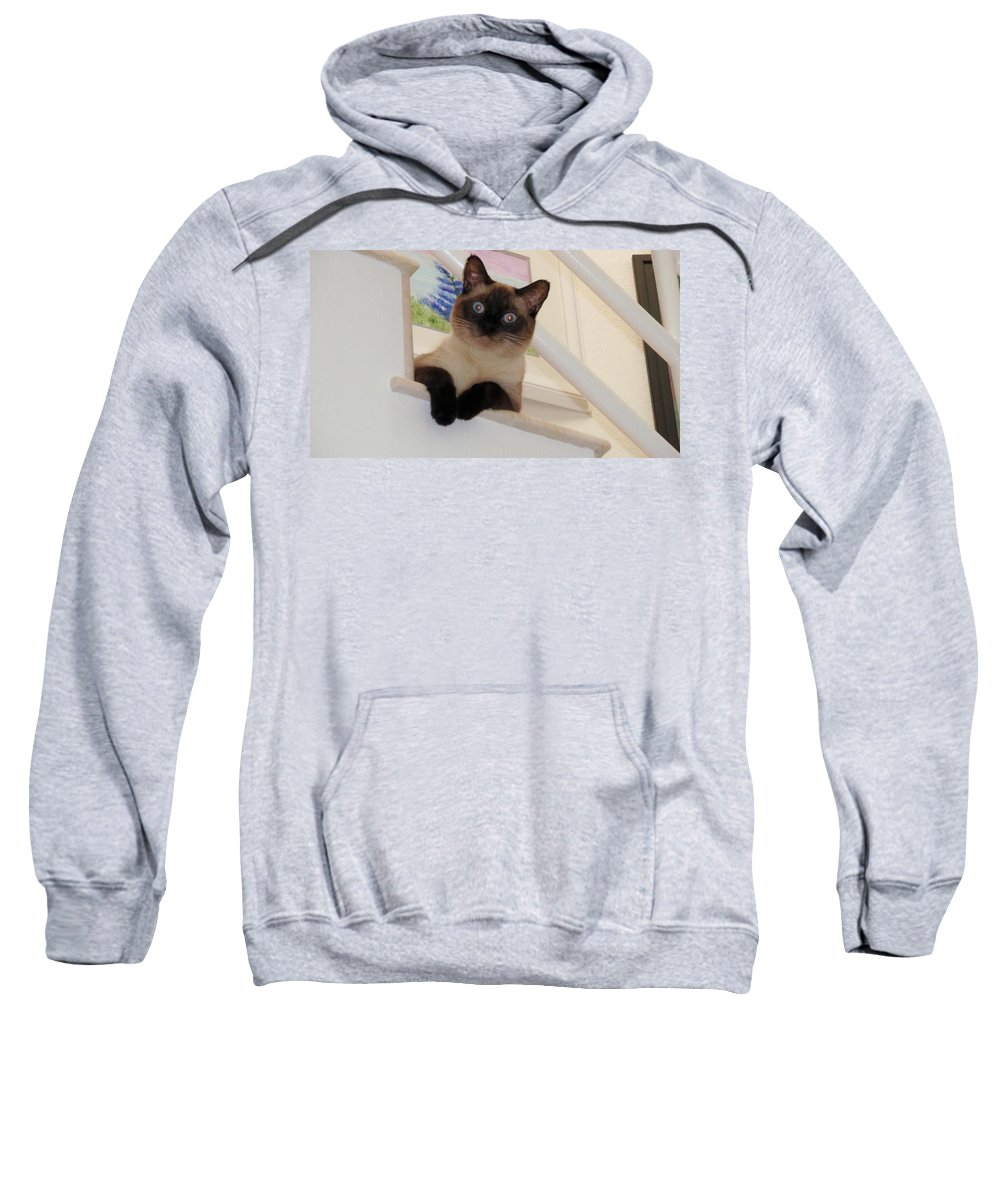 Siamese Sweatshirt featuring the photograph I'm Adorable by Jamie Frier