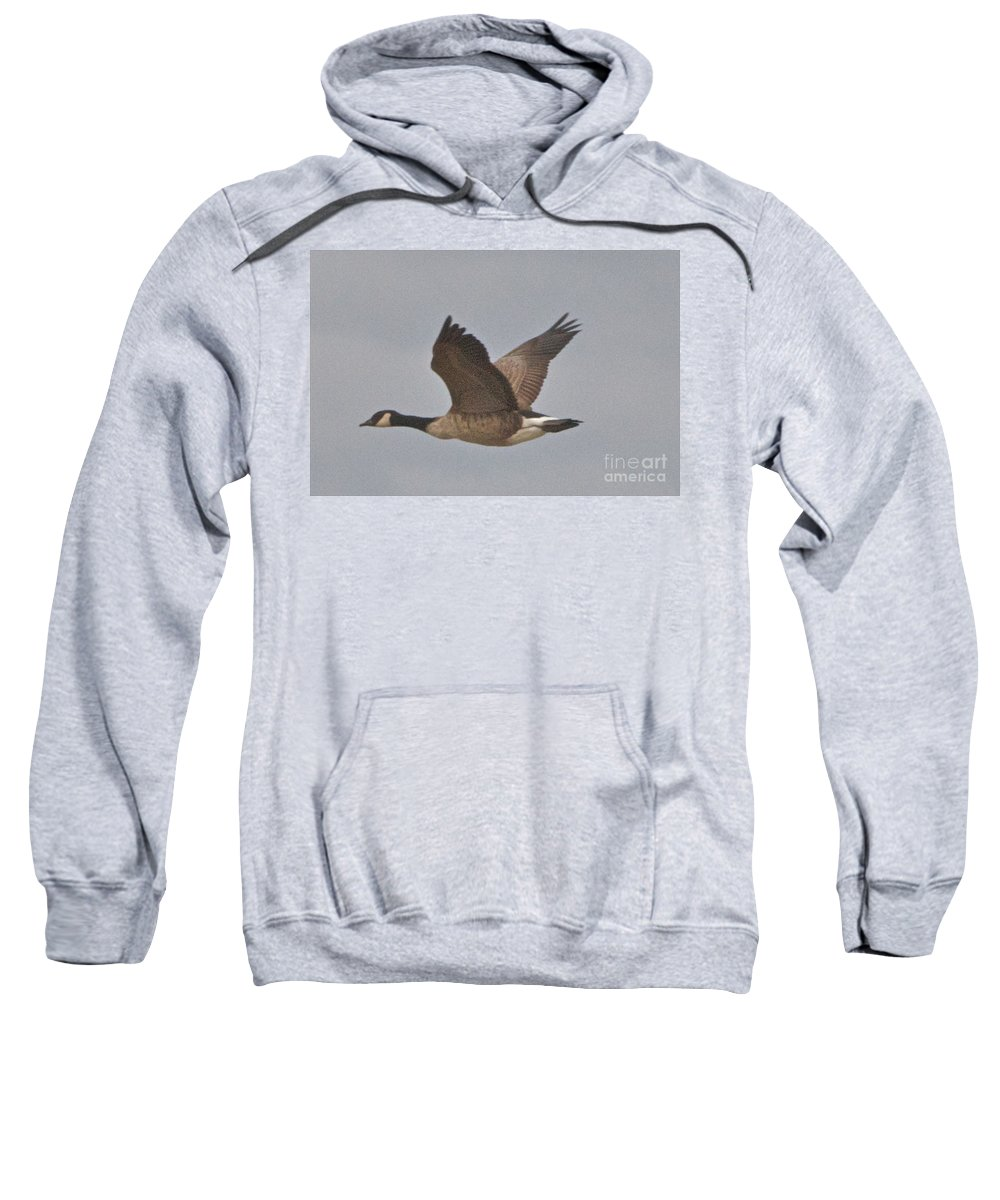 Canadian Geese Sweatshirt featuring the photograph In Flight by William Norton