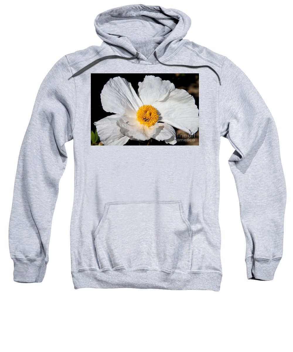 Peony Sweatshirt featuring the photograph Innocent Krinkle - White Peony By Diana Sainz by Diana Raquel Sainz