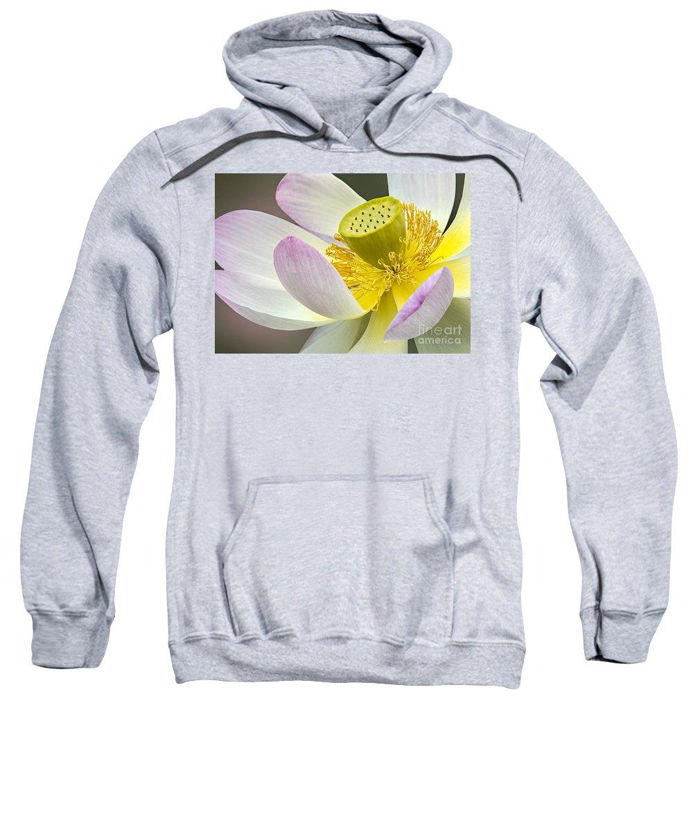 Sacred Lotus Sweatshirt featuring the photograph Intimate Sacred Lotus Bloom by Susan Candelario