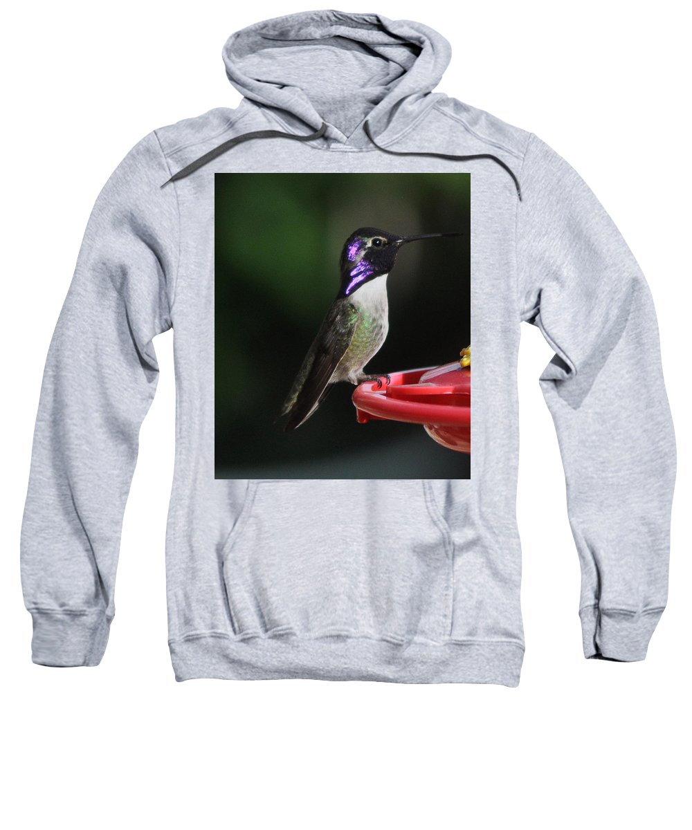 Male Sweatshirt featuring the photograph Iridescent Purple Headed Costa by Jay Milo