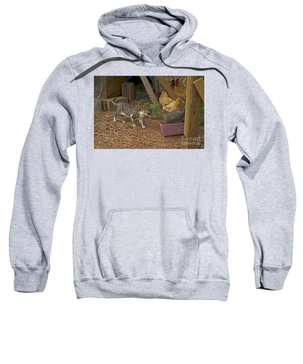Animal Sweatshirt featuring the photograph Is She Really In My Litter Pan by Donna Brown