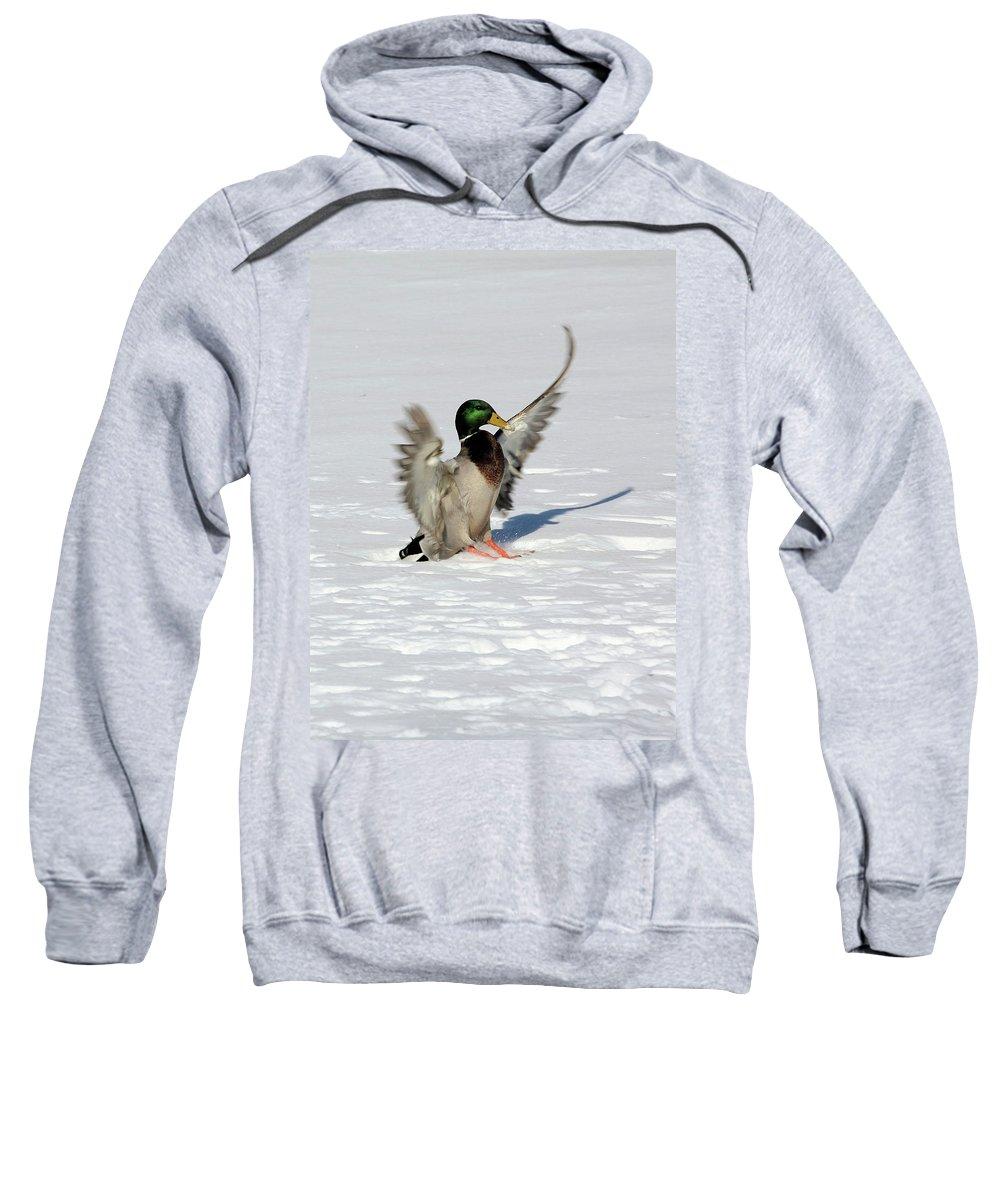 Mallard Sweatshirt featuring the photograph Just Like Skiing by Karol Livote