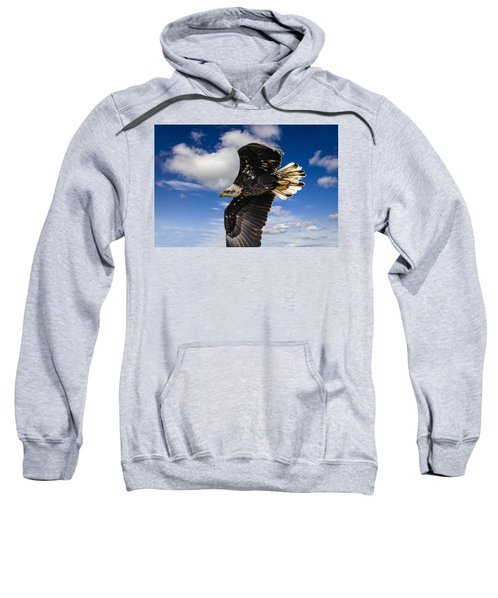 Alaska Sweatshirt featuring the photograph Juvenile Bald Eagle by Jack R Perry