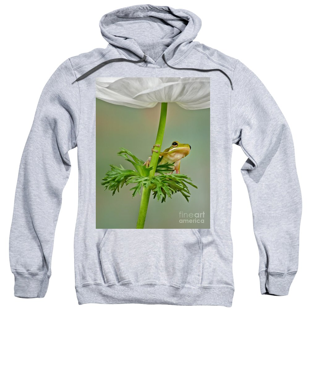 Flowers Sweatshirt featuring the photograph Kermits Canopy by Susan Candelario