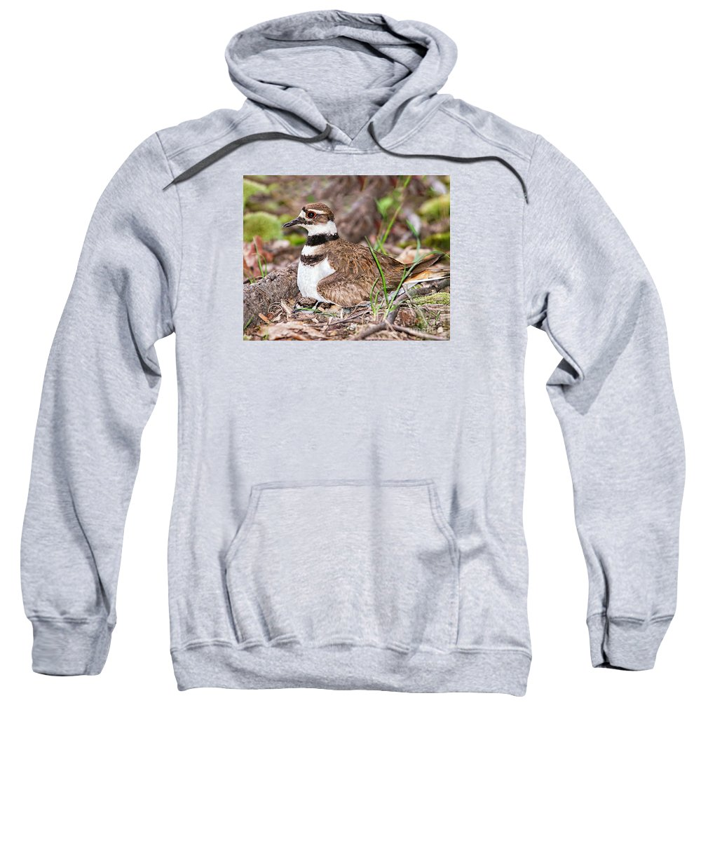 Killdeer Sweatshirt featuring the photograph Killdeer And Young by Timothy Flanigan