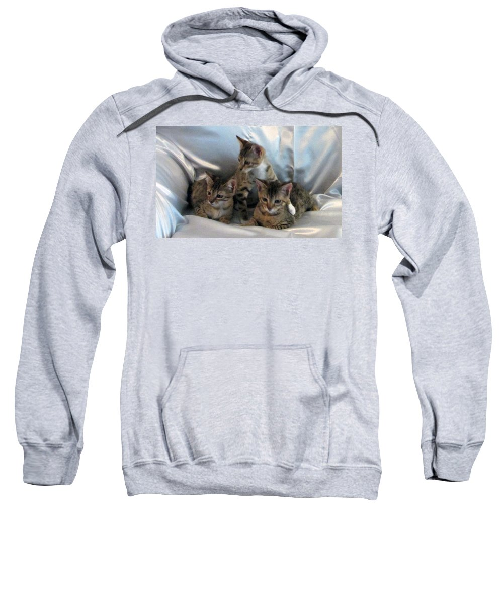 Sweatshirt featuring the photograph Kim Kip And Kaitlyn by Debi Singer