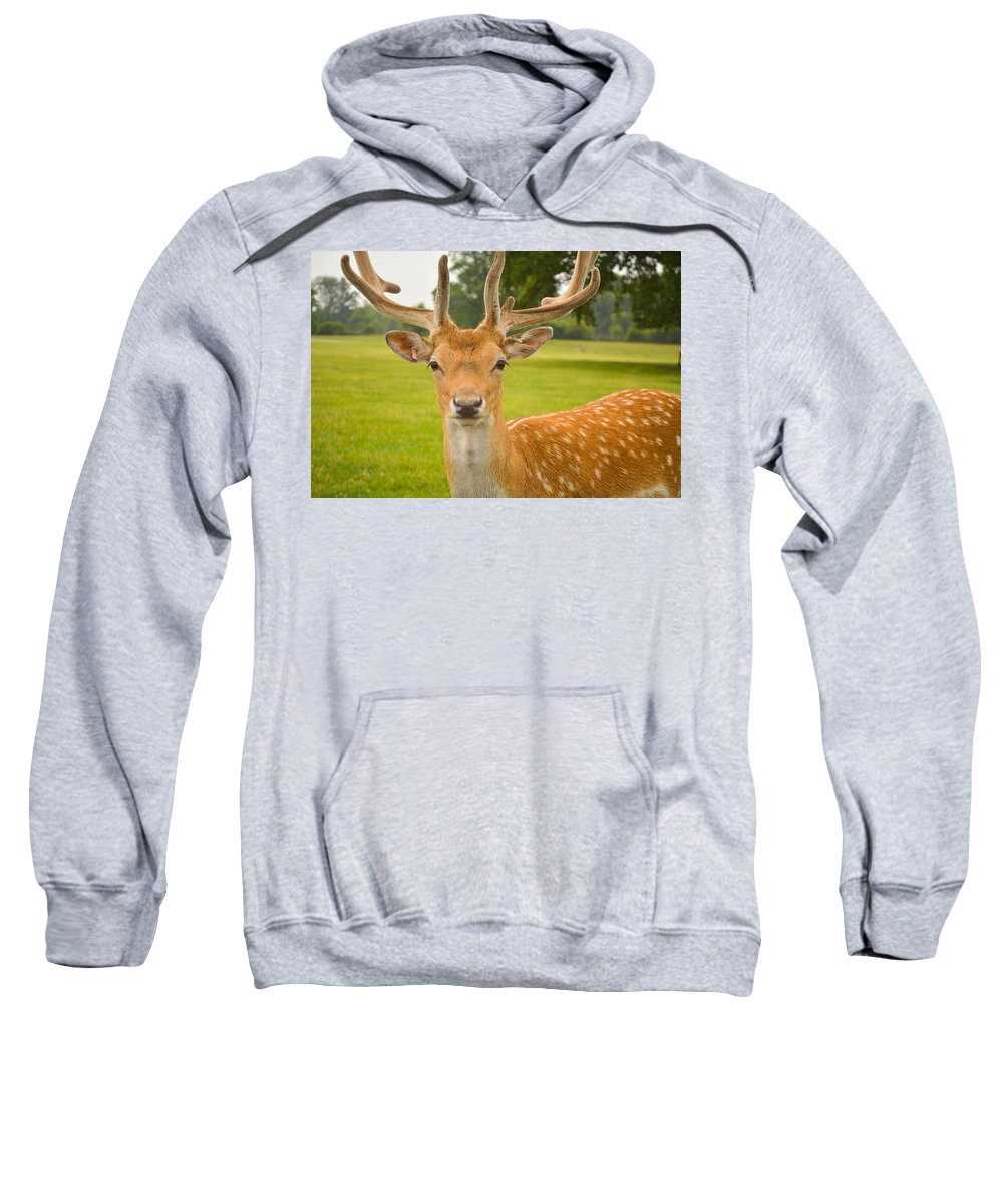 Deer Sweatshirt featuring the photograph King Of The Spotted Deers by Mair Hunt