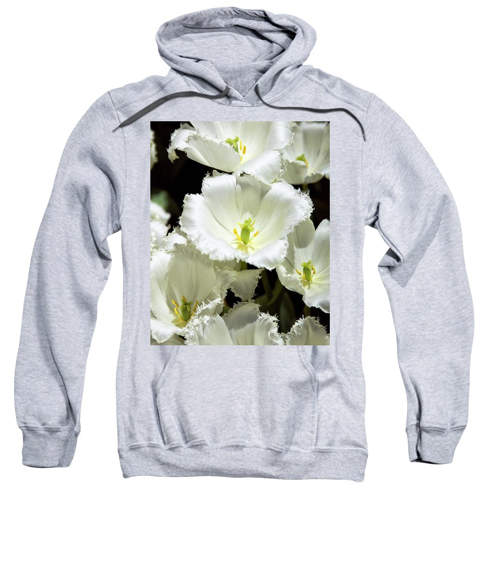 White Flower Sweatshirt featuring the photograph Lace Palm Springs by William Dey