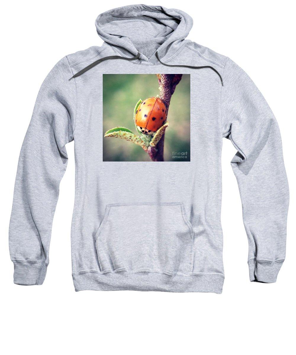 Ladybug Sweatshirt featuring the photograph Ladybug by Kerri Farley