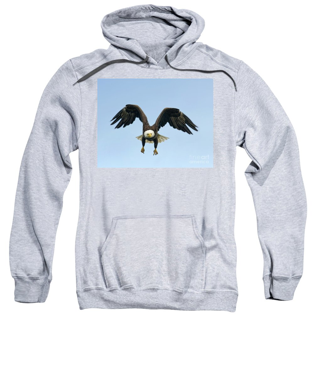 Eagles Sweatshirt featuring the photograph Landing Approach by Claudia Kuhn