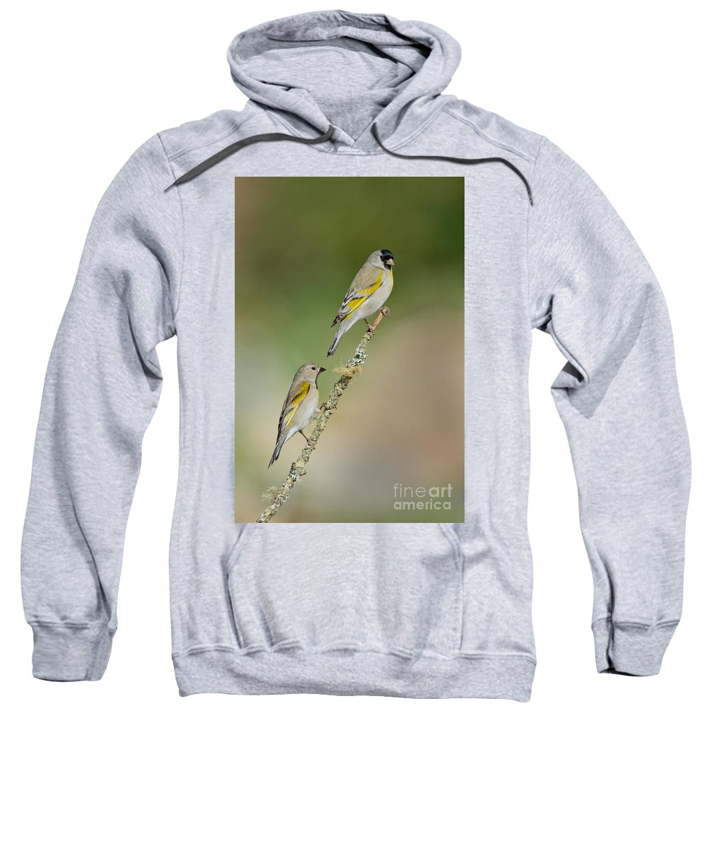 Animal Sweatshirt featuring the photograph Lawrence Goldfinch Pair On Branch by Anthony Mercieca