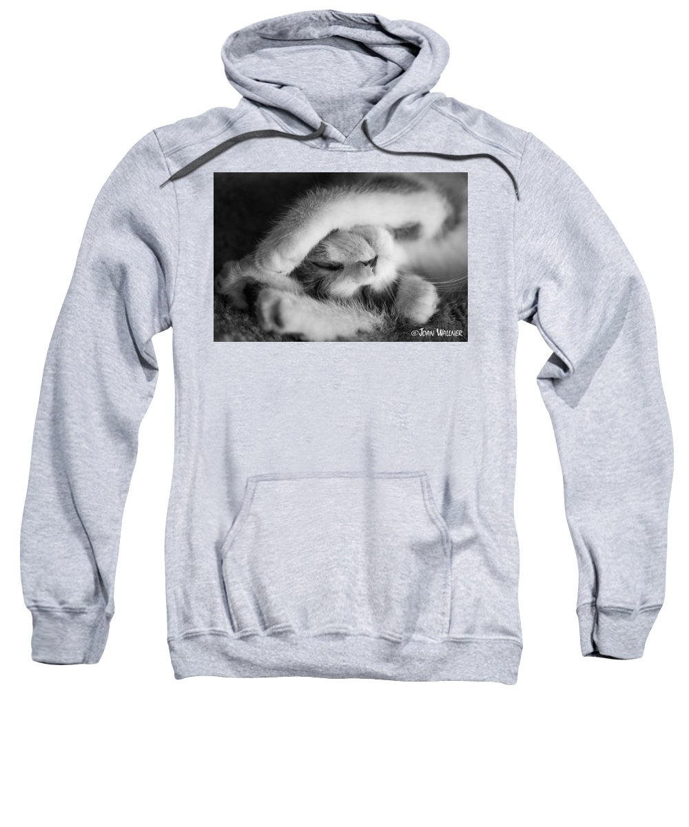 Katmai Kitty Sweatshirt featuring the photograph Lazy Day Bw by Joan Wallner