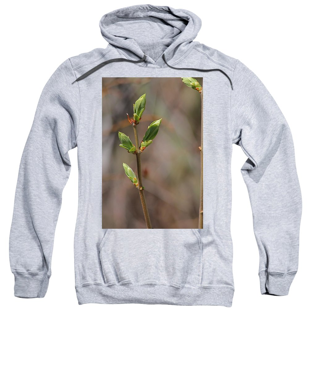 Bushes Sweatshirt featuring the photograph Leafing Out by Wayne Williams