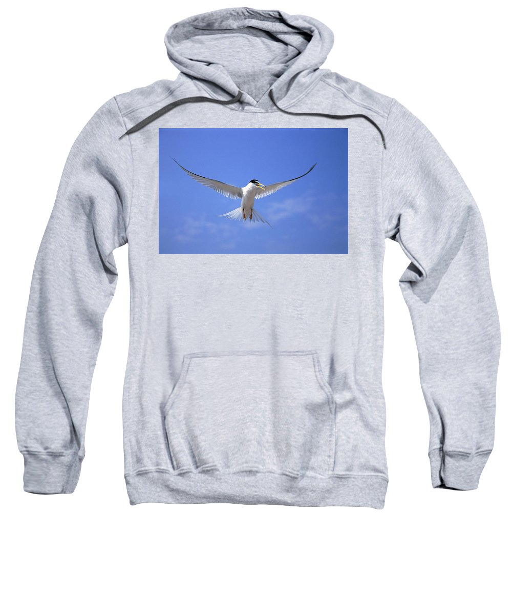 Blue Sky Sweatshirt featuring the photograph Least Tern Flying by Tom Vezo