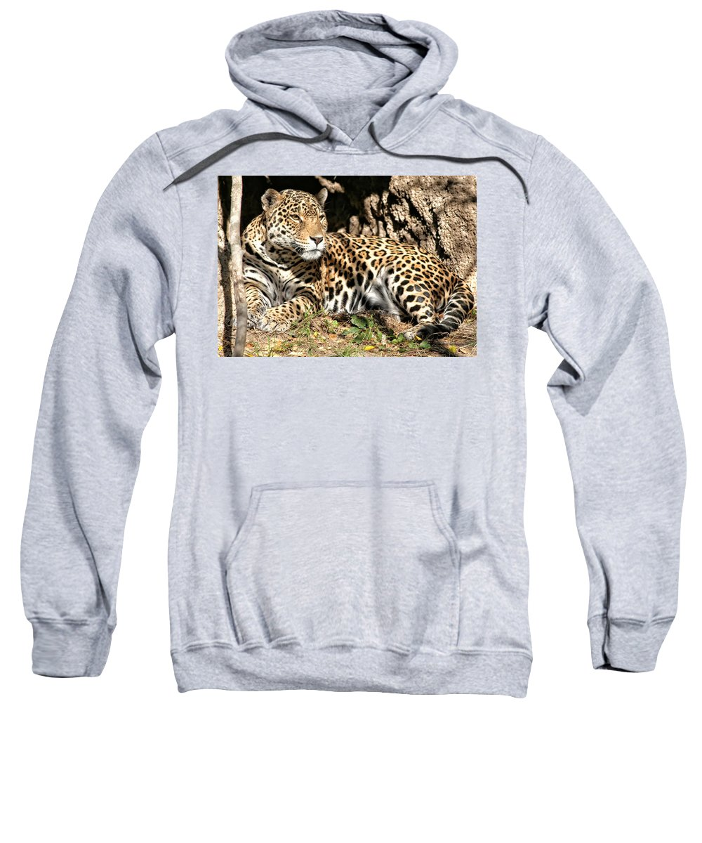 Leopard Sweatshirt featuring the photograph Leopard by Debby Richards