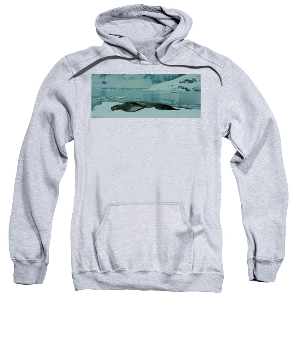 Leopard Seal Sweatshirt featuring the photograph Leopard Seal Hauled Out by Amanda Stadther