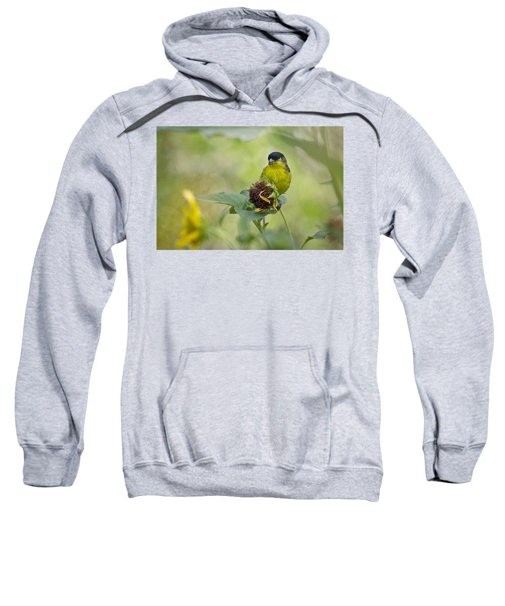Lesser Gold Finch Sweatshirt featuring the photograph Lesser Goldfinch by Saija Lehtonen