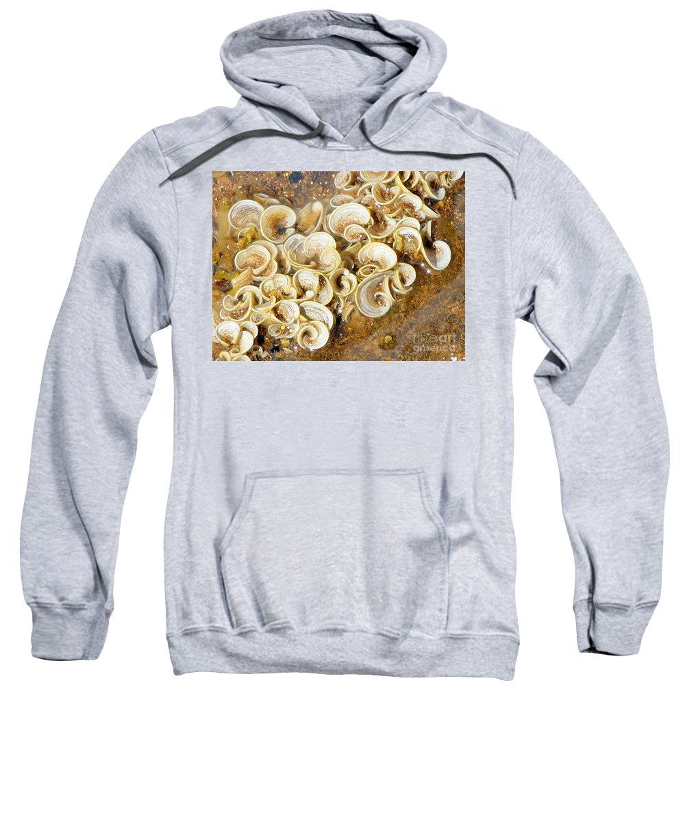 Sea Life Sweatshirt featuring the photograph Life On The Rocks by Mary Deal