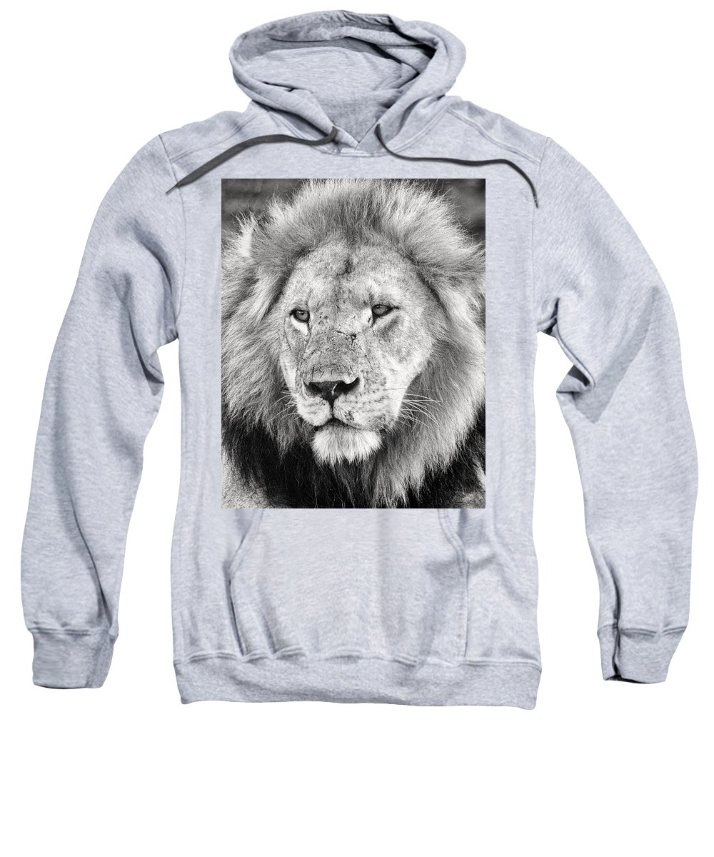 3scape Sweatshirt featuring the photograph Lion King by Adam Romanowicz
