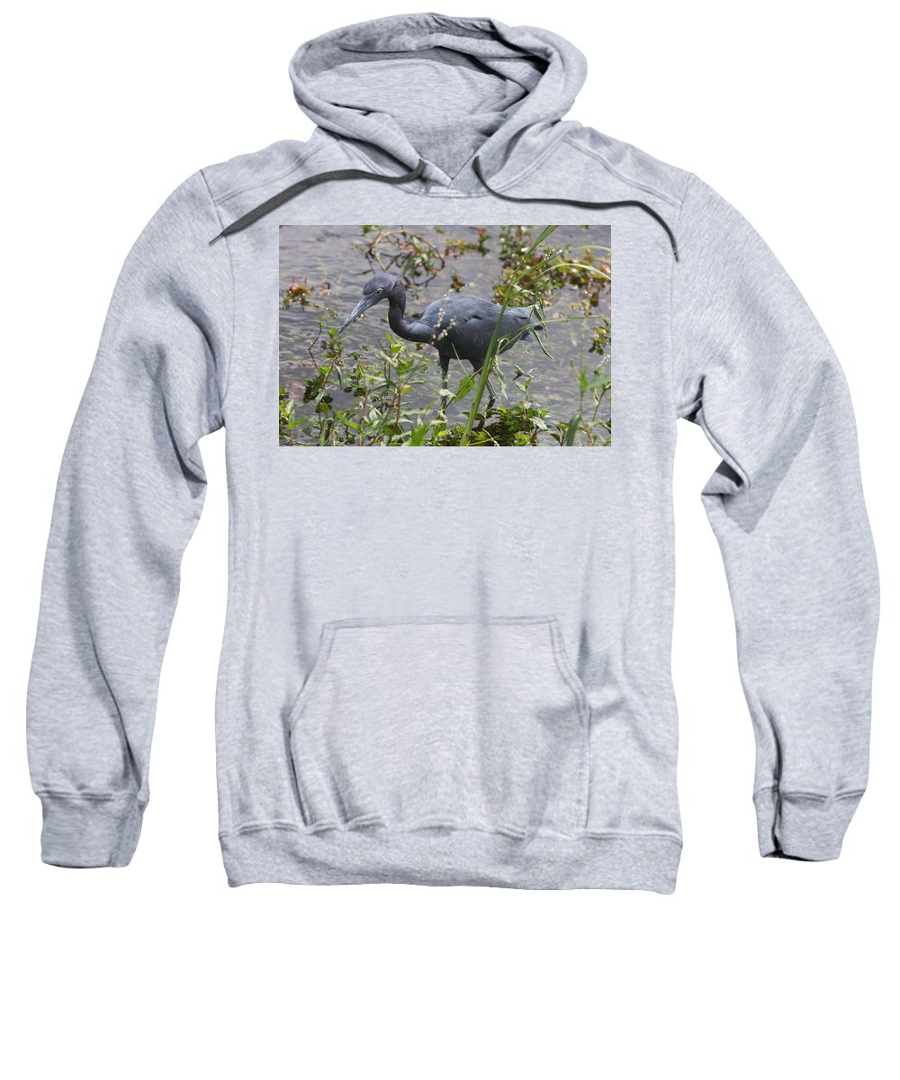 Heron Sweatshirt featuring the photograph Little Blue Heron - Waiting For Prey by Christiane Schulze Art And Photography