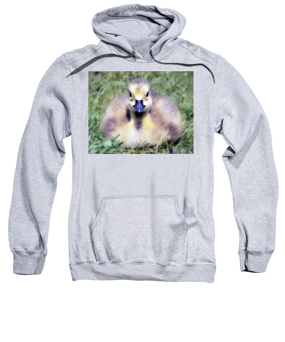 Duckling Sweatshirt featuring the photograph Little Duckling by Hal Halli