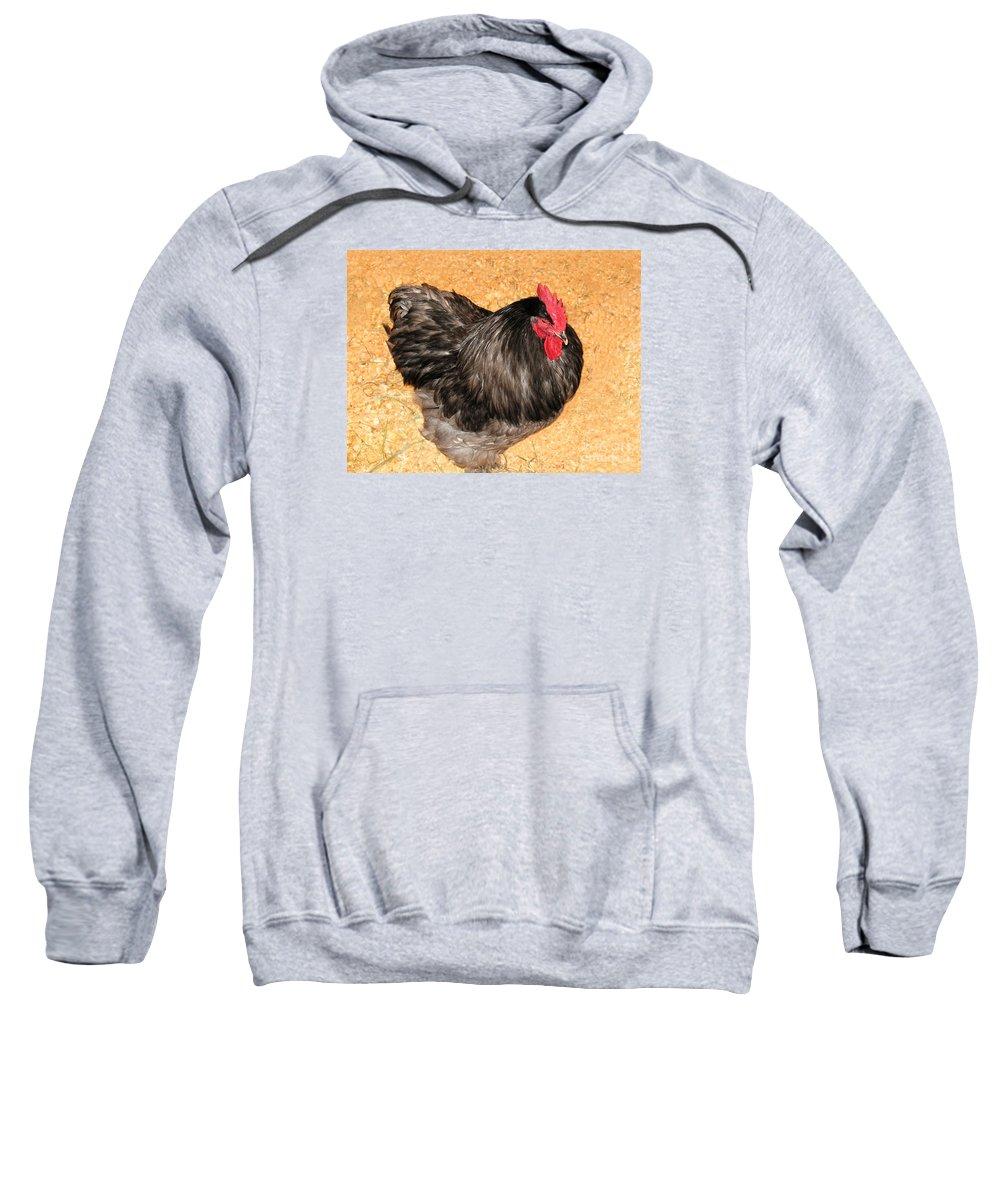 Chicken Photo Sweatshirt featuring the photograph Live Chicken - 2011 Houston Livestock Show by Connie Fox