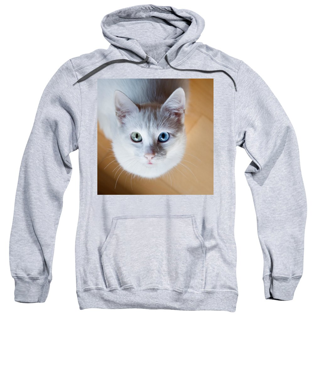 Cat Sweatshirt featuring the photograph Looking Up by Jorge Maia