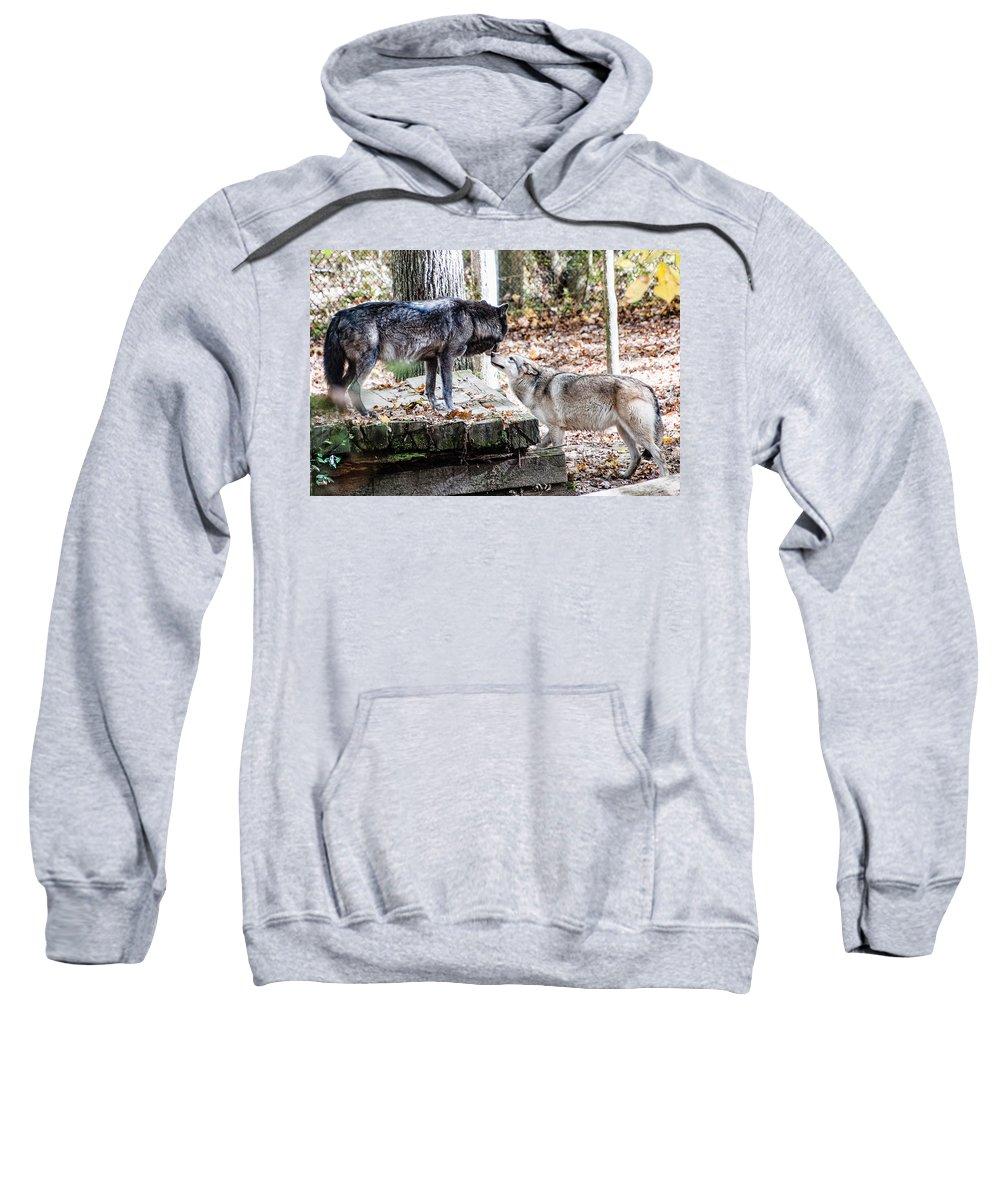Wolf Sweatshirt featuring the photograph Lovers by Sheri Bartoszek