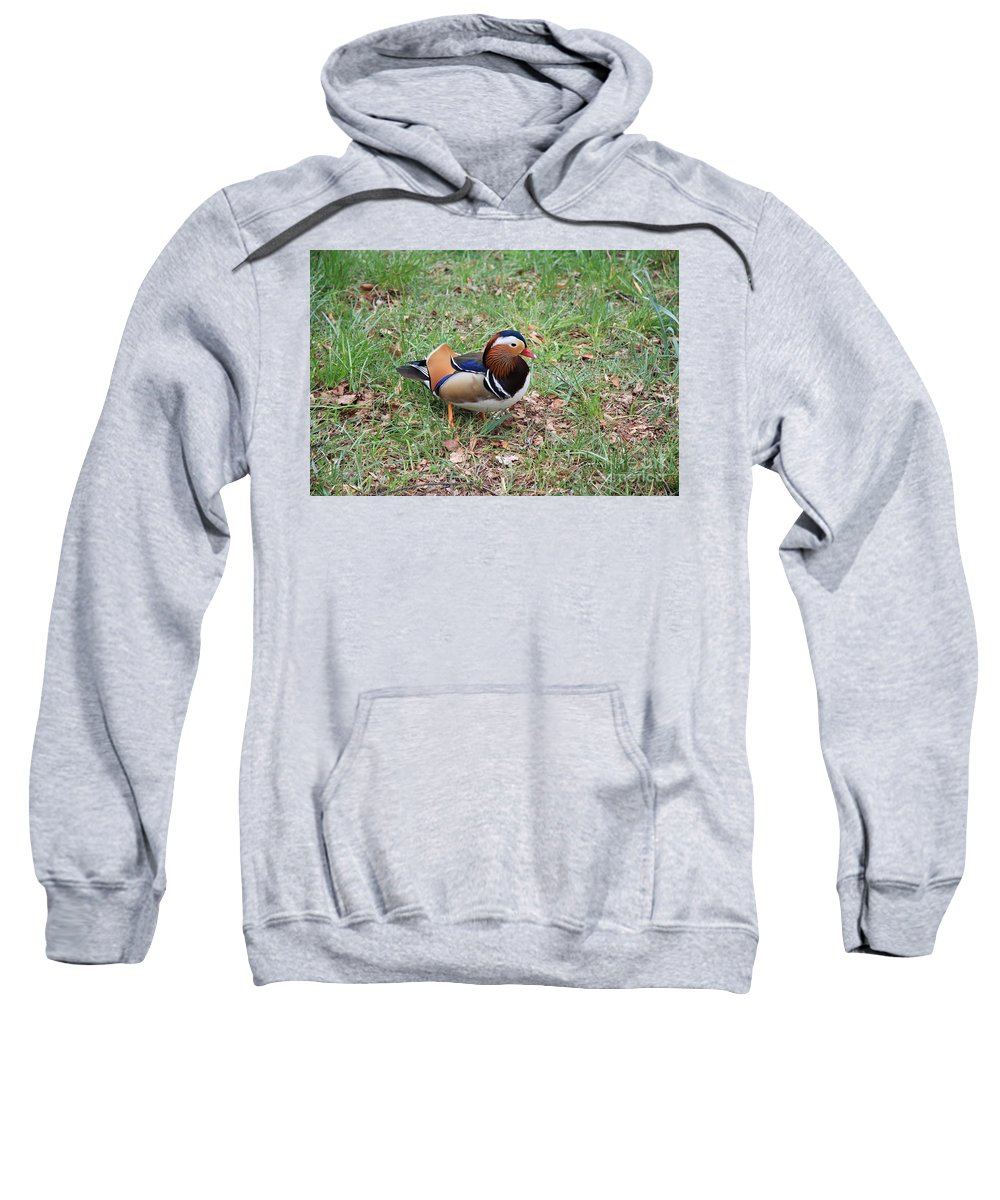 Duck Sweatshirt featuring the photograph Madarin Duck by Christiane Schulze Art And Photography