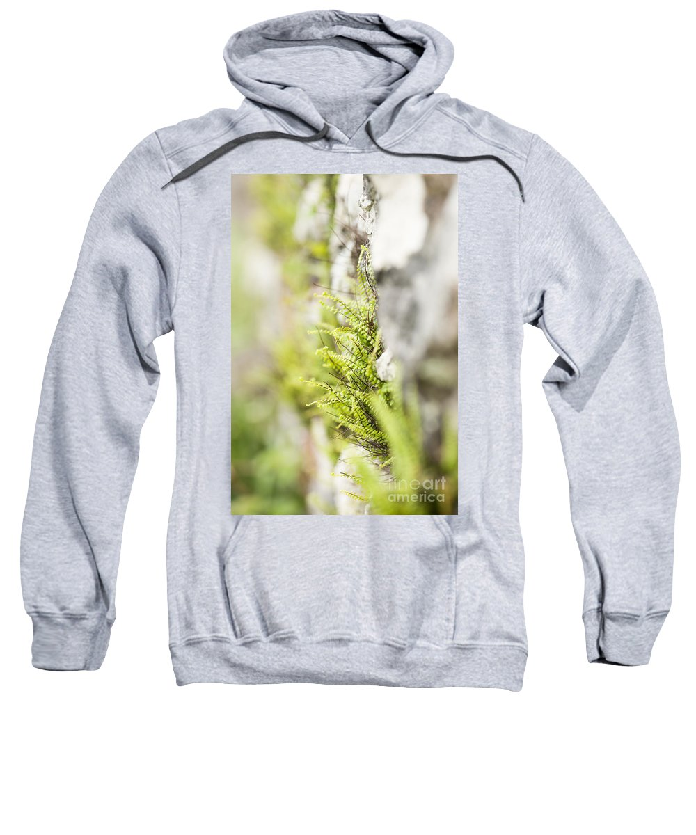 Abstract Sweatshirt featuring the photograph Maiden-hair Spleenwort by Anne Gilbert