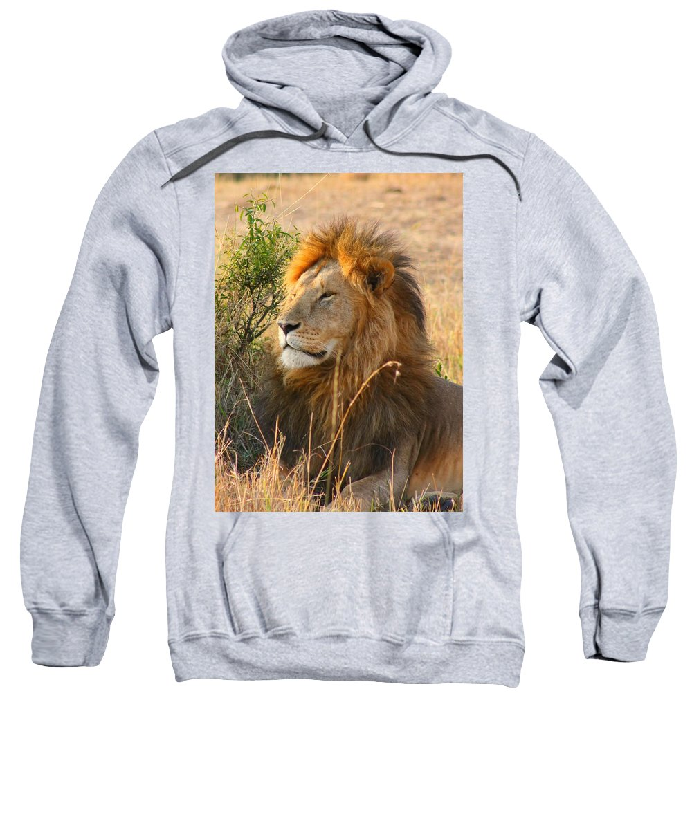 Lion Sweatshirt featuring the photograph Male Lion by Amanda Stadther