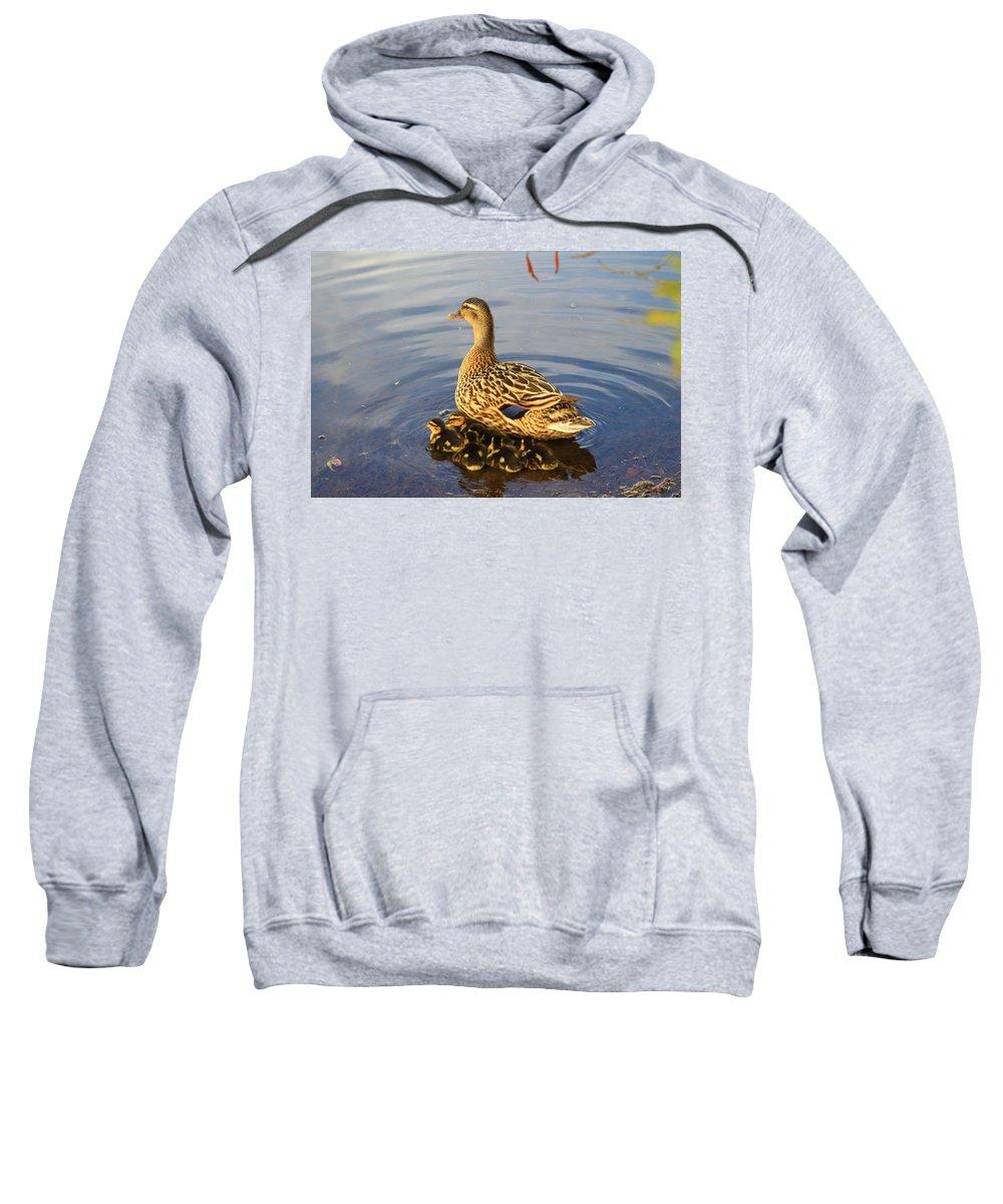 Mallard Sweatshirt featuring the photograph Mama Mallard And Her Ducklings by Mary Koval