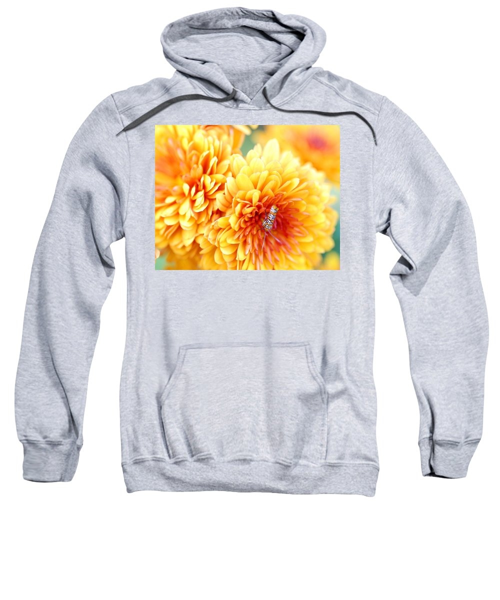 Alianthus Webworm Moth Sweatshirt featuring the photograph Ailanthus Webworm Visits The Marigold by Optical Playground By MP Ray