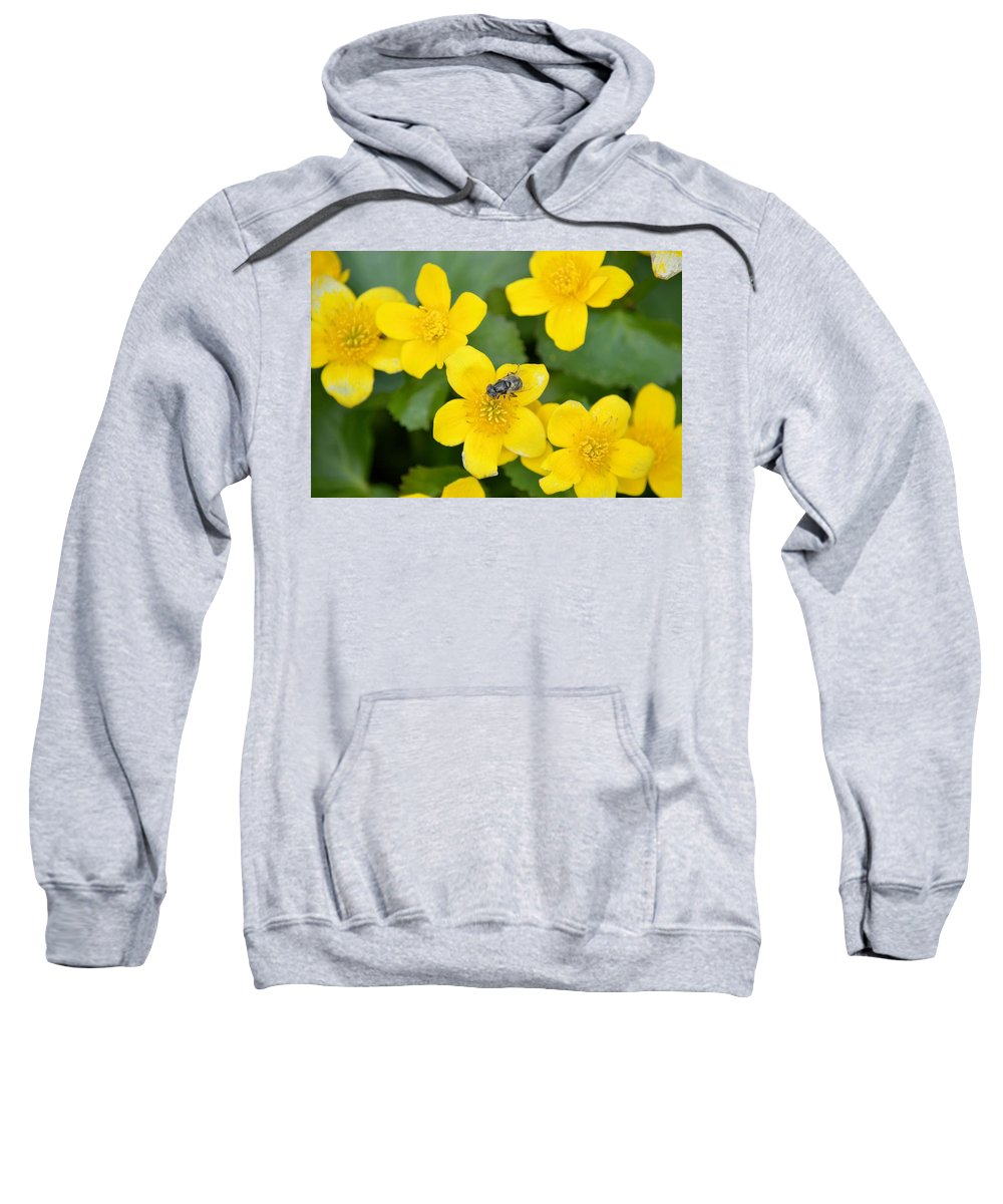 Marigold Sweatshirt featuring the photograph Marsh Marigold by Bonfire Photography