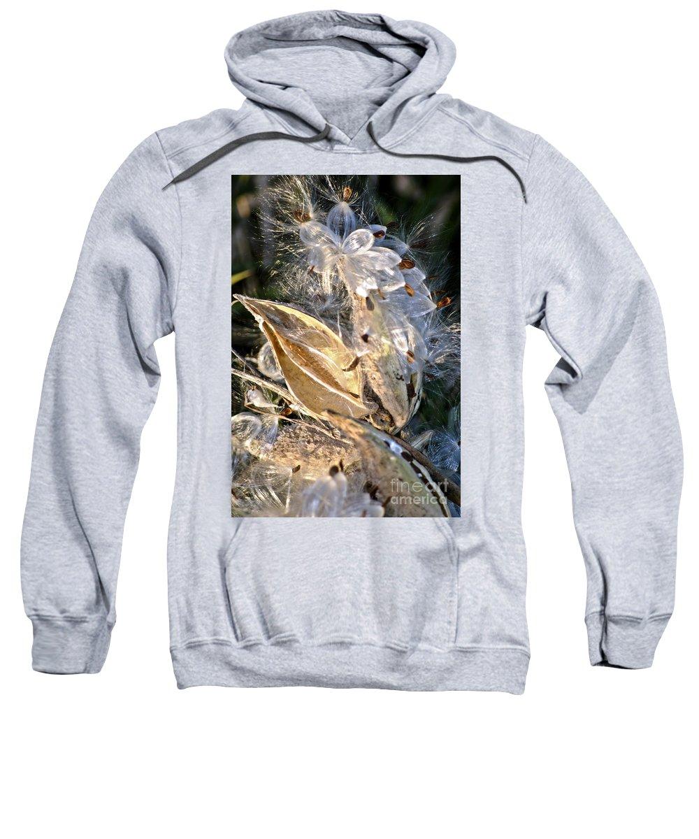 Milkweed Canvas Prints Sweatshirt featuring the digital art Milkweed II by Danielle Summa