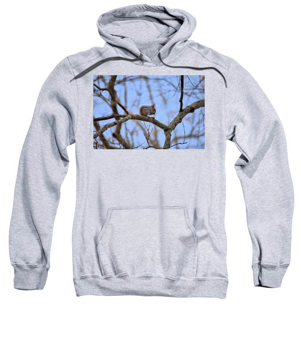 7609 Sweatshirt featuring the photograph Mister Squirrel by Gordon Elwell