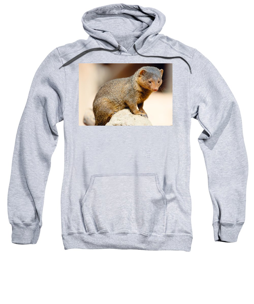 Mongoose Sweatshirt featuring the photograph Mongoose by Pati Photography