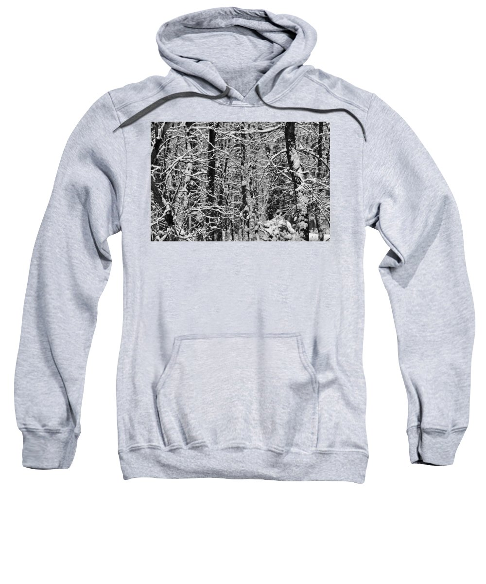 Winter Forest Sweatshirt featuring the photograph Monochrome Winter Wilderness by Dan Sproul