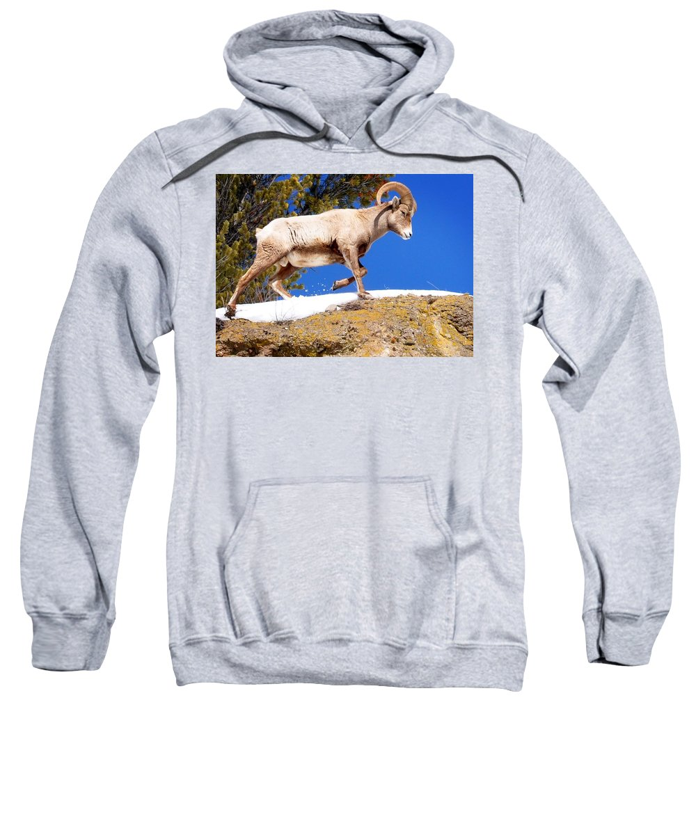 Hoback Junction Sweatshirt featuring the photograph Morning Walk by Image Takers Photography LLC - Laura Morgan