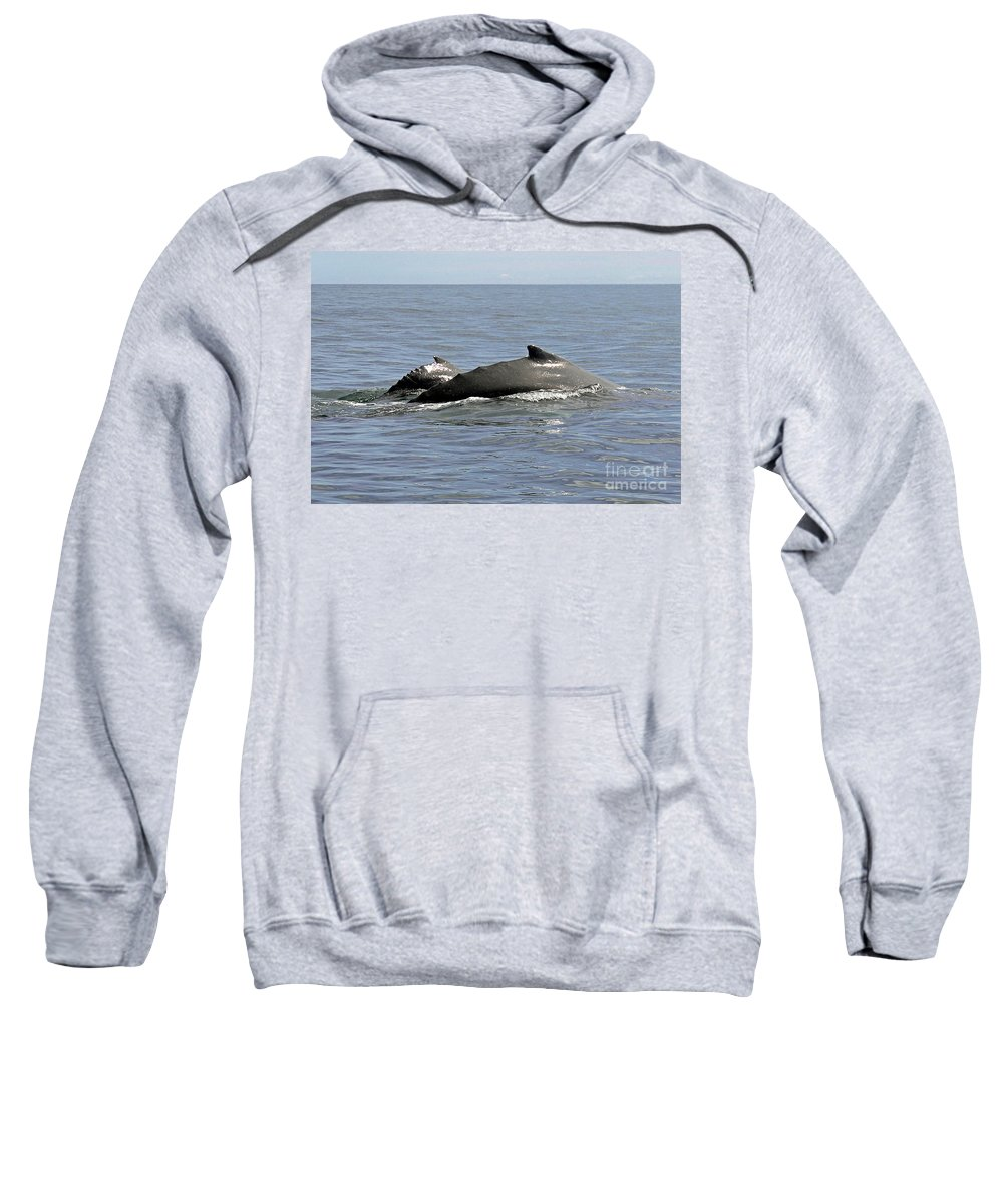 Panama Sweatshirt featuring the photograph Mother And Baby by Bob Hislop
