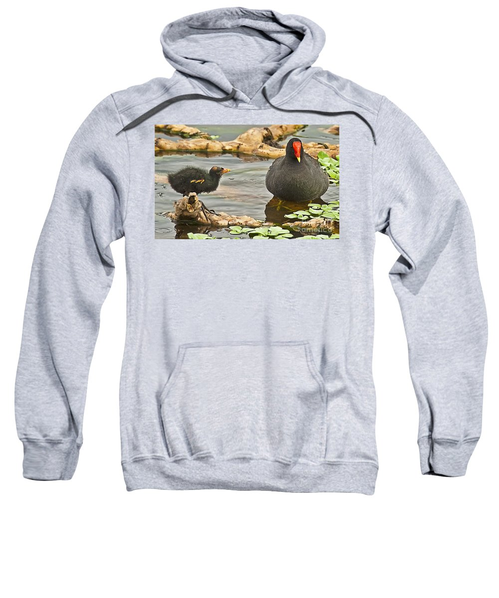 Birds Sweatshirt featuring the photograph Mother And Chick by Bruce Bain