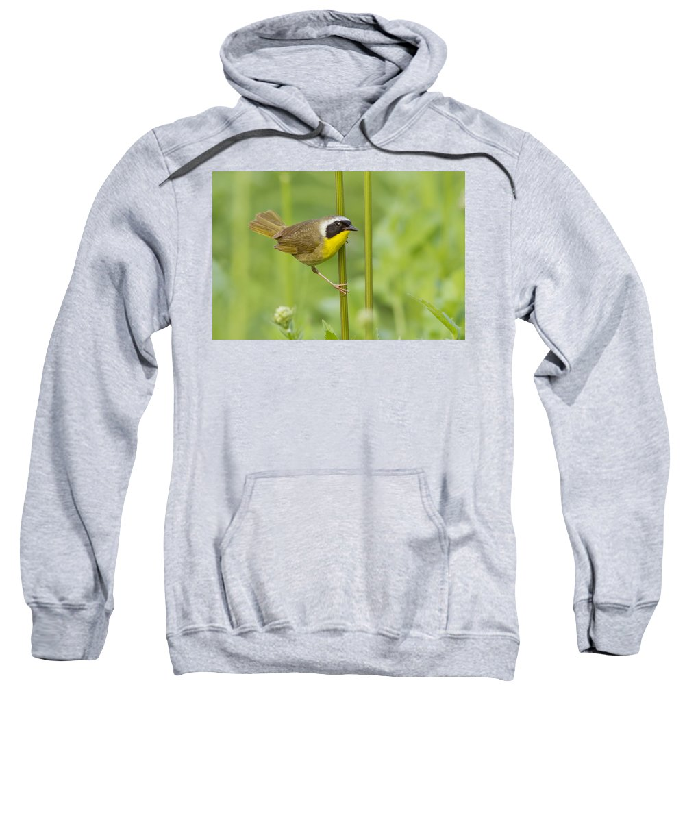 Warblers Sweatshirt featuring the photograph Mr Yellowthroat by Mircea Costina Photography