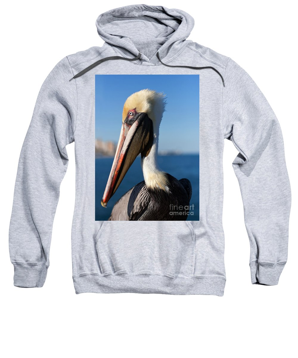 Pelican Sweatshirt featuring the photograph My Left Side by Barbara McMahon