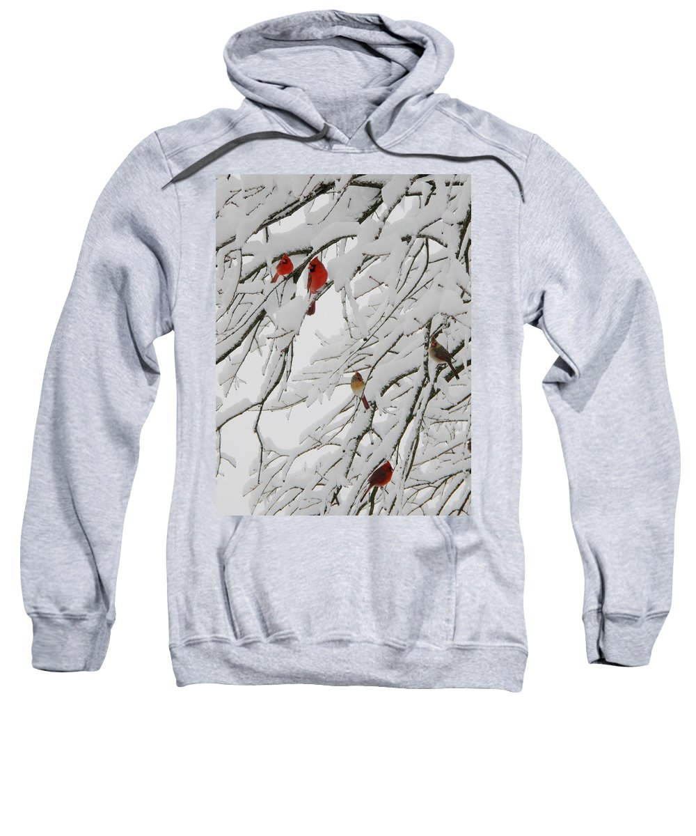 Red Birds Sweatshirt featuring the photograph Nature's Christmas Ornaments by Shannon Story