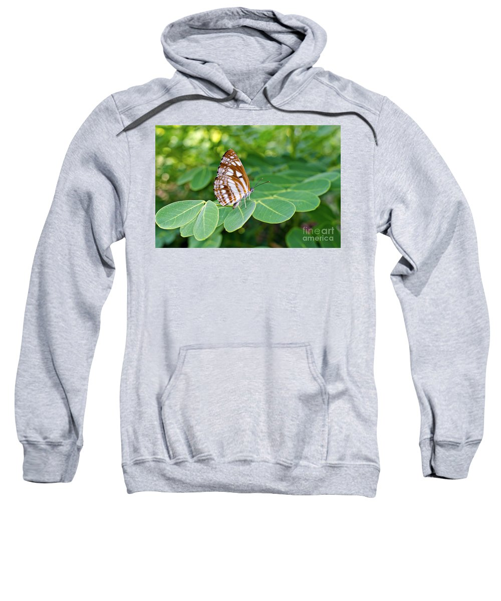Butterfly Sweatshirt featuring the photograph Neptis Hylas / Common Sailer Butterfly by Image World