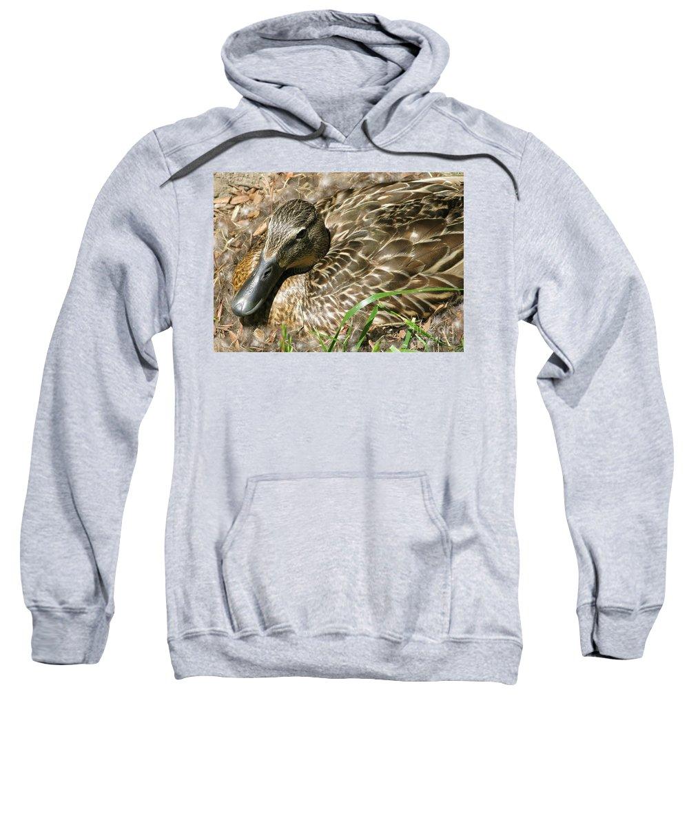 Mallard Sweatshirt featuring the photograph Nesting Mallard by Ann Horn